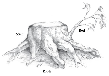 stump with roots and branch