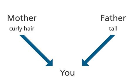 diagram, parents, attributes, you