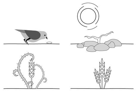 bird with seed, seedling among rocks, plant among weeds, plant