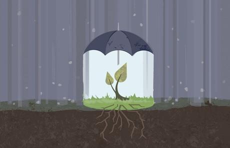 plant under umbrella