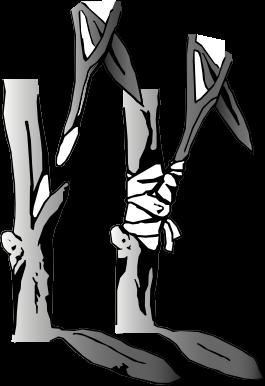 Illustration of a graft