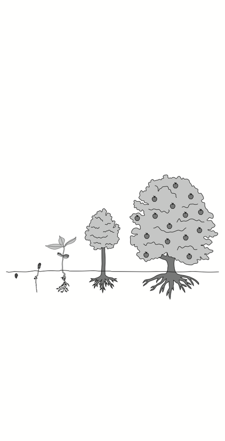 Illustration of seed becoming tree