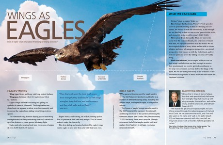 eagle wings article
