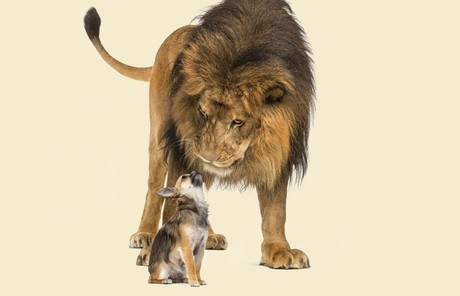 lion and dog