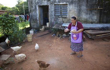 Adriana feeding chickens