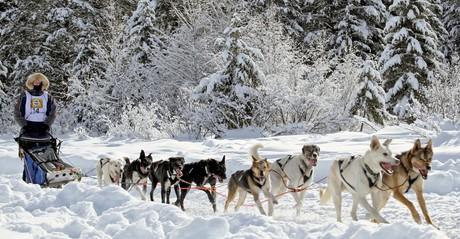 boy dogsledding
