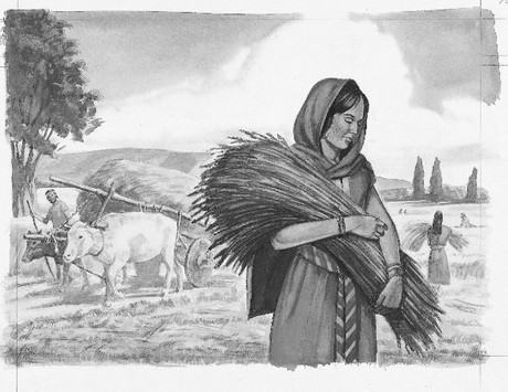 Woman carrying harvested wheat