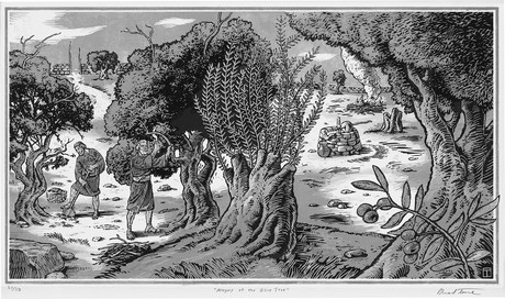 Allegory of the olive tree